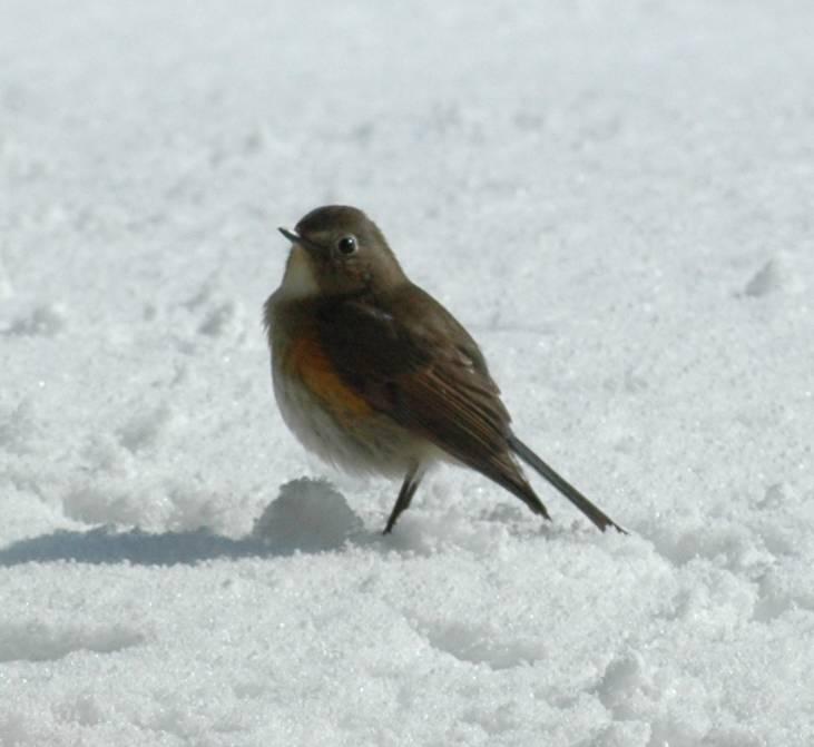 Bird2S583
