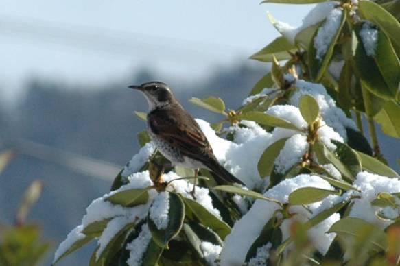 Bird1583